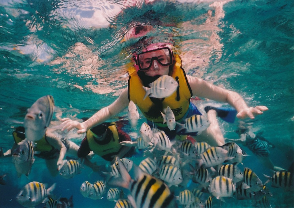 reef-snorkeling-377390_960_720