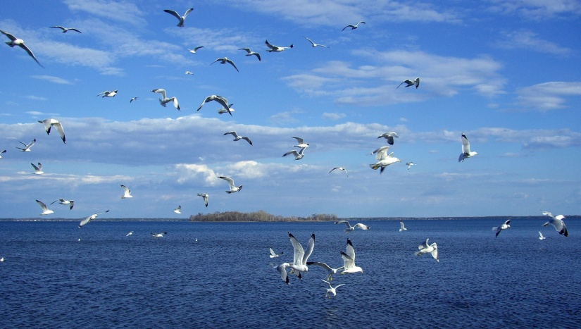 b3c68d1fed29cf25ab43fc25e000a101_download-and-view-full-size-seagull-over-water-clipart_1907-1080.jpeg